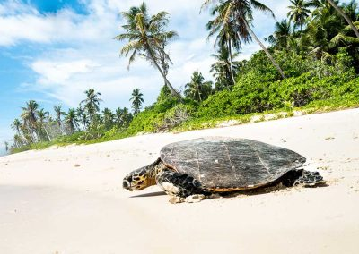 Curieuse Island Seychelles, Sea Turtle, Sailing Holidays