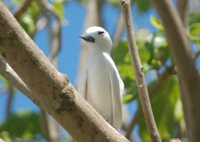 Curieuse Island Seychelles, Bird Watching, Sailing Holidays