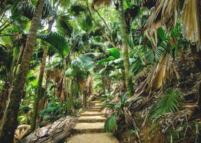 Rainforest walk in Valee De Mai, Garden Of Eden, Seychelles